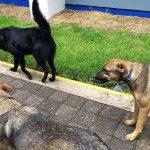 México: Universidad formaliza empleo de tres 'perritos' como guardias de seguridad