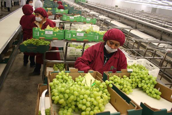 Crecen las exportaciones agrícolas y agropecuarias