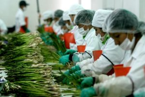 Perú vendió al mundo más de US$ 900 mllns