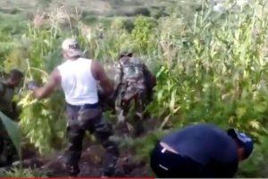 Vraem: PNP halla 100 mil plantones de marihuana [VÍDEO]