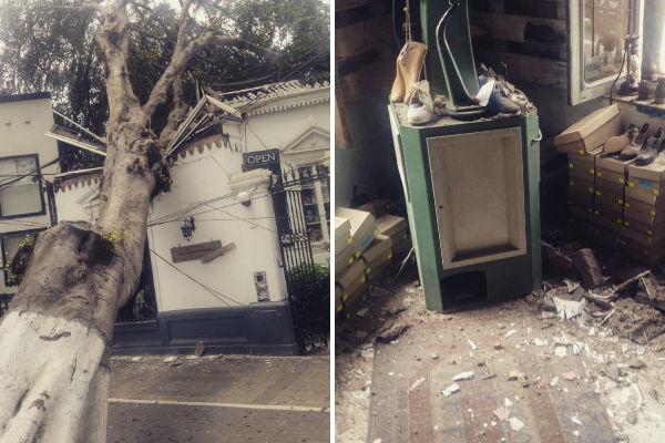 Barranco: Caída de un árbol afecta inmueble en avenida Pedro de Osma