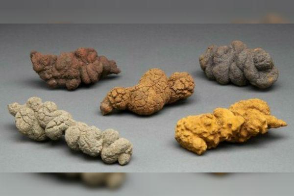 Heces fosilizadas revelan diversidad en el Cretácico