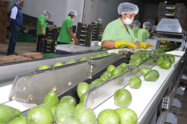 Crece 21.9 % exportación de productos tradicionales