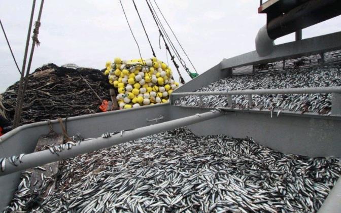 Pesca de anchoveta podría duplicarse este año
