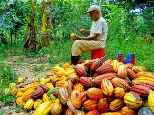 Perú: sede de evento cumbre sobre cacao