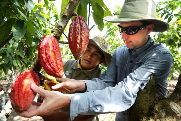 Perú aspira a convertirse en el máximo exportador mundial de cacao