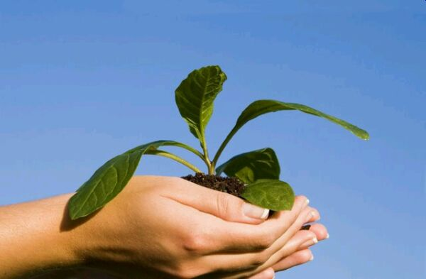 5 consejos para cuidar el medio ambiente desde casa