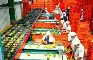 Exportaciones peruanas crecerían en un 18 % este año