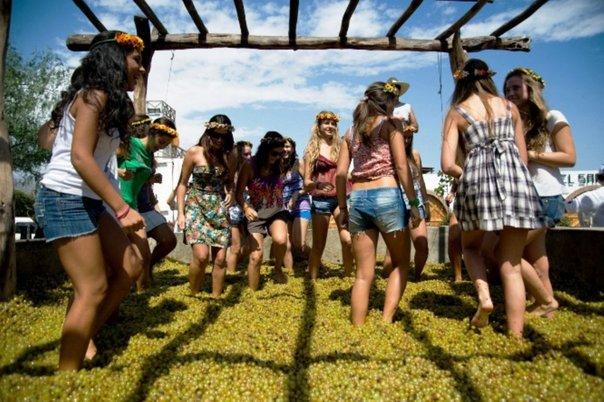 Ica: Festival Internacional de la Vendimia se realizará en Paracas