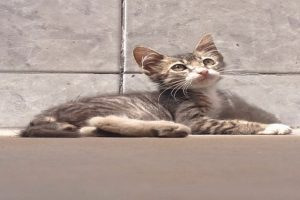 Moquegua: Sentencian a prisión a hombre que mató a gato