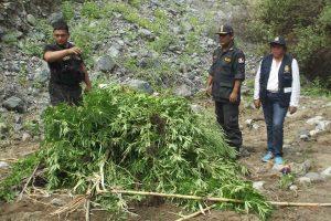 Huánuco: PNP confisca más 56 kilos de marihuana