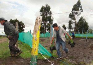 La Libertad: Minagri sembrará 200 mil plantones de pino