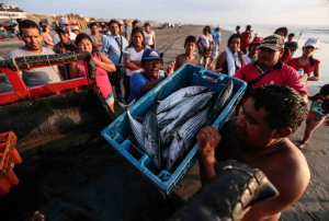 Gobierno reactivará agro y pesca en zonas afectadas