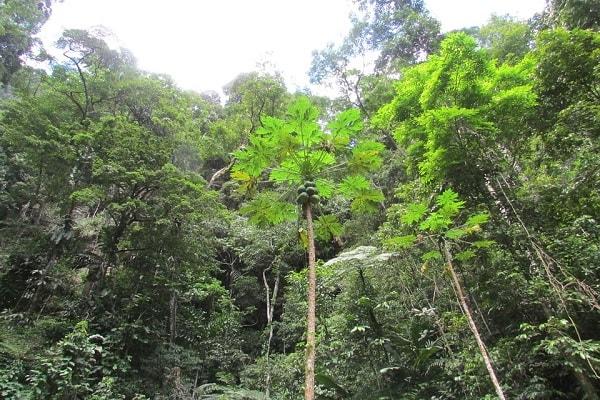 Vení a conocer la puerta del Amazonas