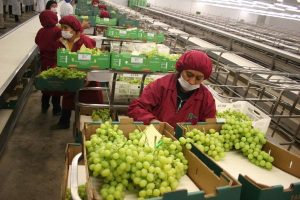 BCR: superávit comercial llegó a US$ 586 mllns en noviembre