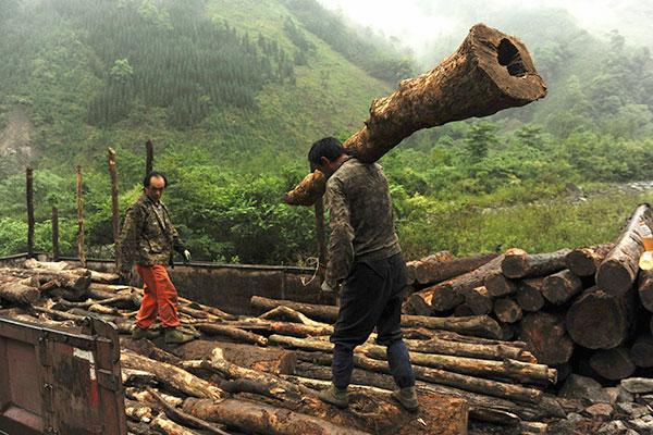 Desechos forestales son fuente de grafeno