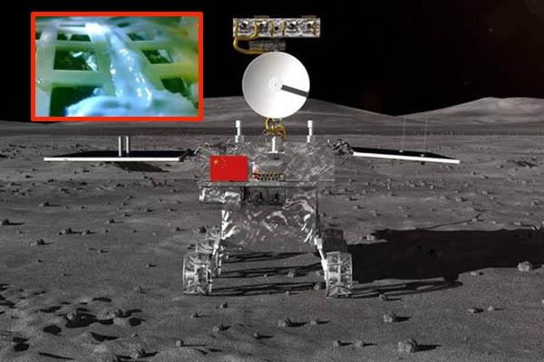 China científicos logran que una semilla de algodón brote en la Luna
