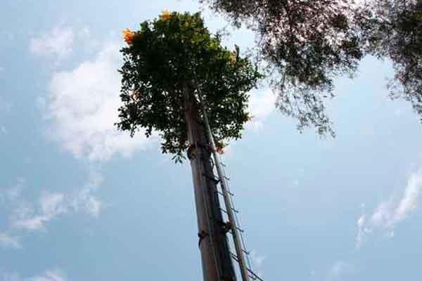 MTC regula instalación de antenas en áreas verdes