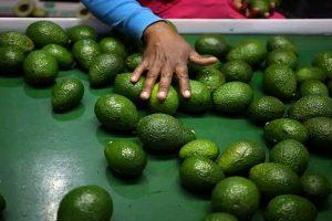 Agroindustria se beneficiará del TLC con la India