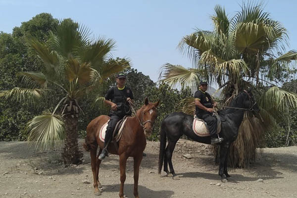 Pachacámac instaura patrullaje a caballo