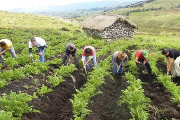Gobierno envía al Congreso proyecto que modifica régimen laboral agrario