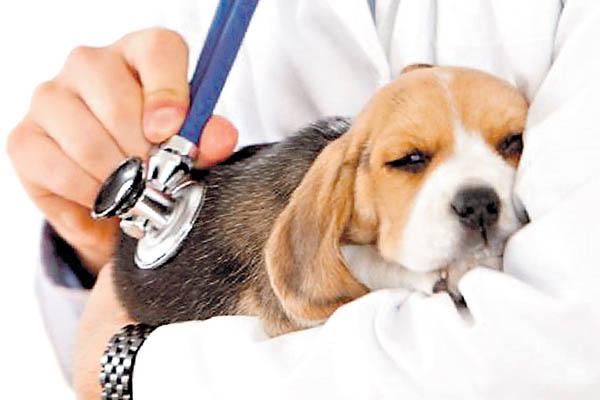 Cómo prevenir una convulsión canina
