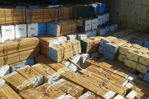 EE.UU. bloquea embarques peruanos de madera ilegal