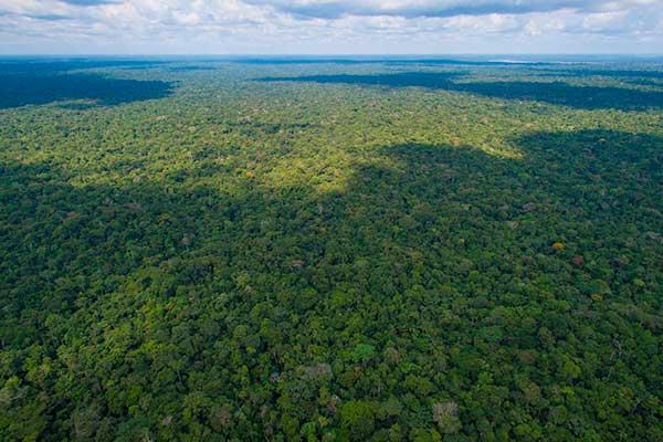 Lecciones de comunidades amazónicas deben replicarse para proteger bosques