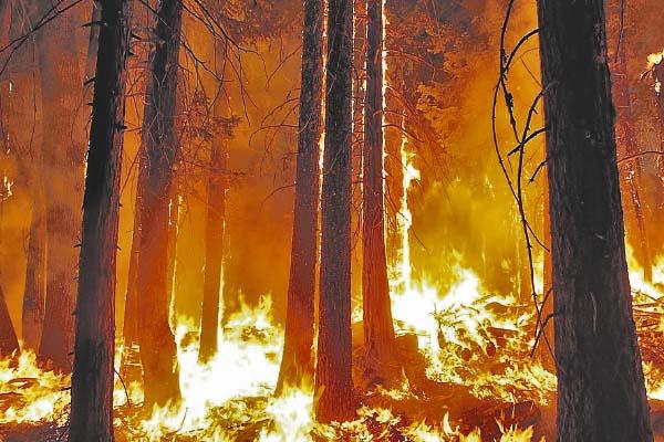 ¿Seguro contra incendios forestales?
