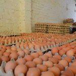 Se duplica consumo de huevo en el Perú