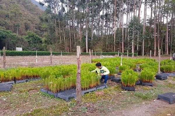 Donan más de 9 mil plantones a asociaciones de Oxapampa para reforestar áreas degradadas