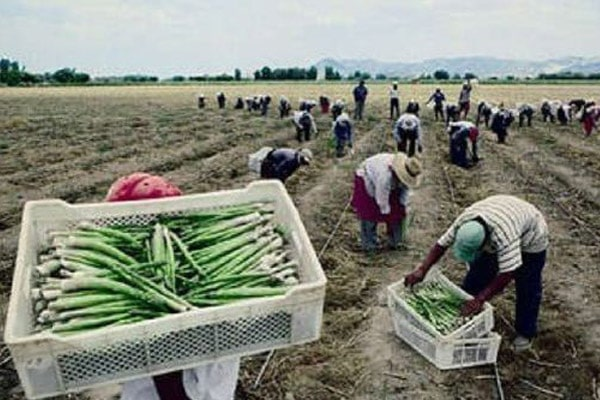 Ley agraria: plantean salario de 58 soles, gratificación y CTS