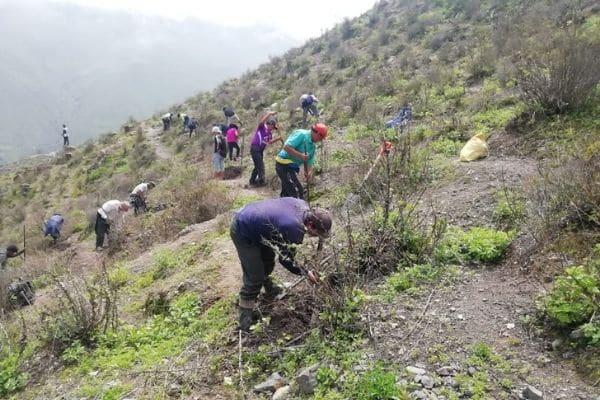 Midagri: Agro Rural favorecerá a más de trescientas familias rurales con plantaciones forestales