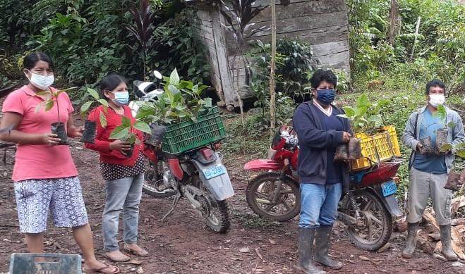 Midagri: Inician repoblamiento de árbol de la Quina en Pichanaqui