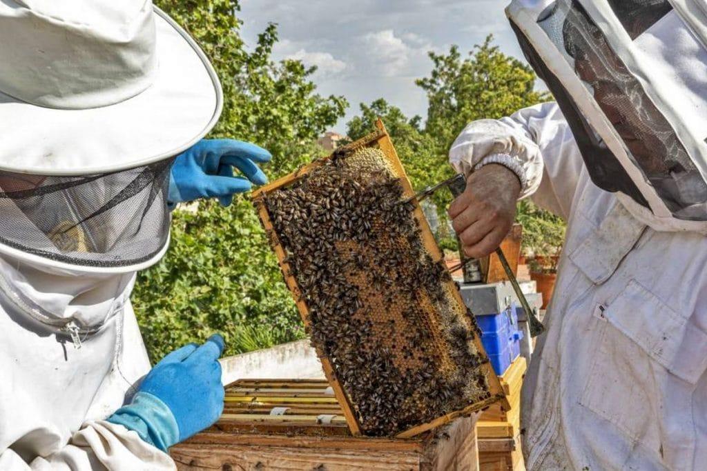 Miel en la azotea, un plan sobre agricultura urbana